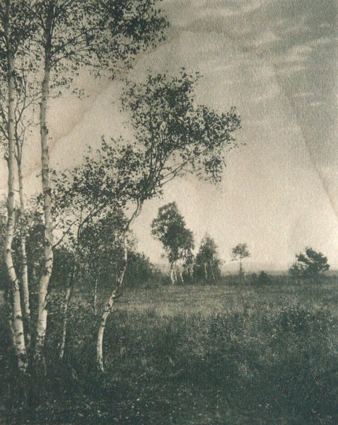 Untitled Landscape with Birch Trees