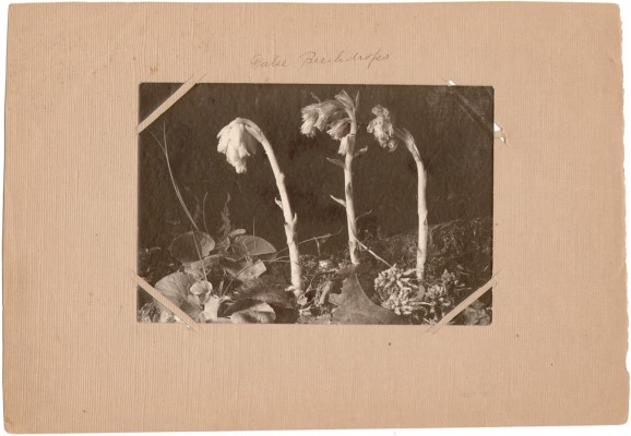Louise Birt Baynes: Photographer & Naturalist