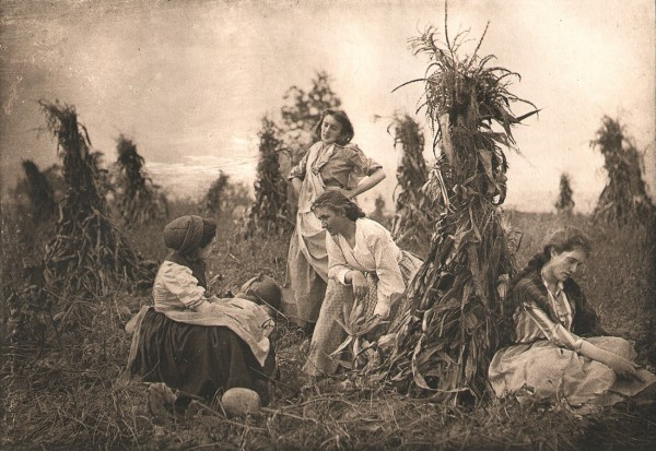 In the Harvest Field