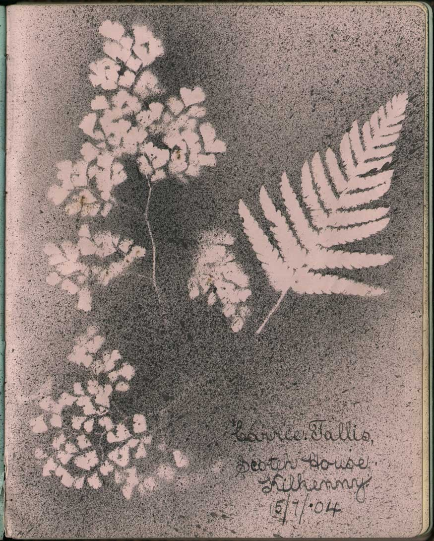 photogram-of-fern-carrie-ta