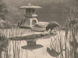 Japanese Hill-and-Pond Garden Island