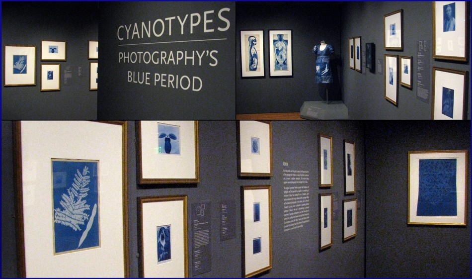 blog-cyanotypes-blue-period-installation-photographs-2016