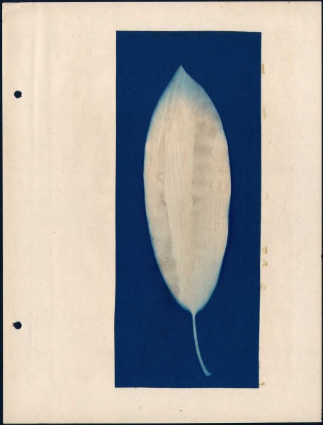 Leaf Form Specimen Photograms