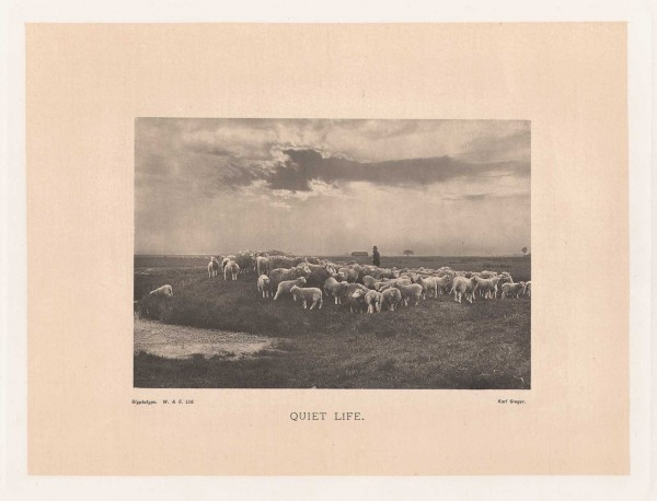 Photographs of the Year 1892