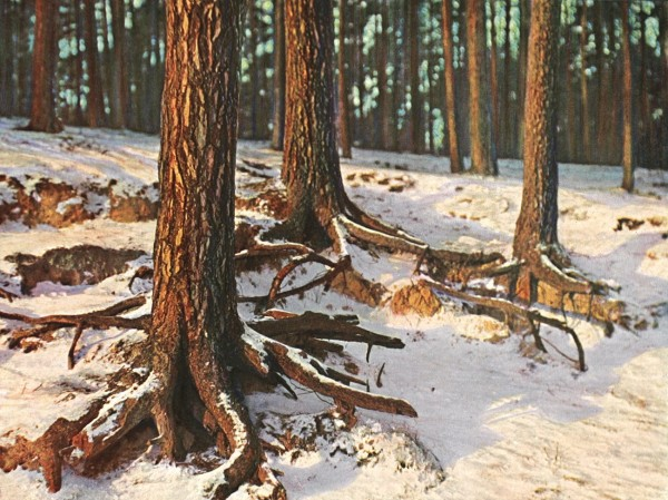 Untitled Tree trunks in Winter