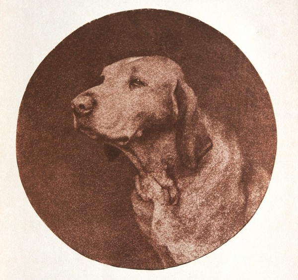 Untitled Portrait of a Hound
