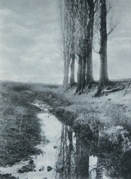 Untitled Canal with Trees