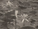 Japanese Garden Water Lily Study