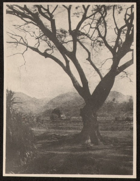 Tree in Hawaiian Landscape