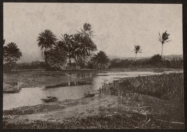 Hawaiian River or Marsh with Palm Trees