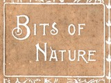 Cover: Bits of Nature: Ten Photogravures of American Scenery