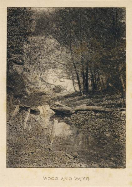 Bits of Nature: A Series of Ten Photogravures from Nature