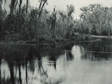 On the Ocklawaha, Florida