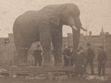 Moving Jumbo into Barnum Museum