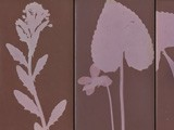 Botanical Photograms