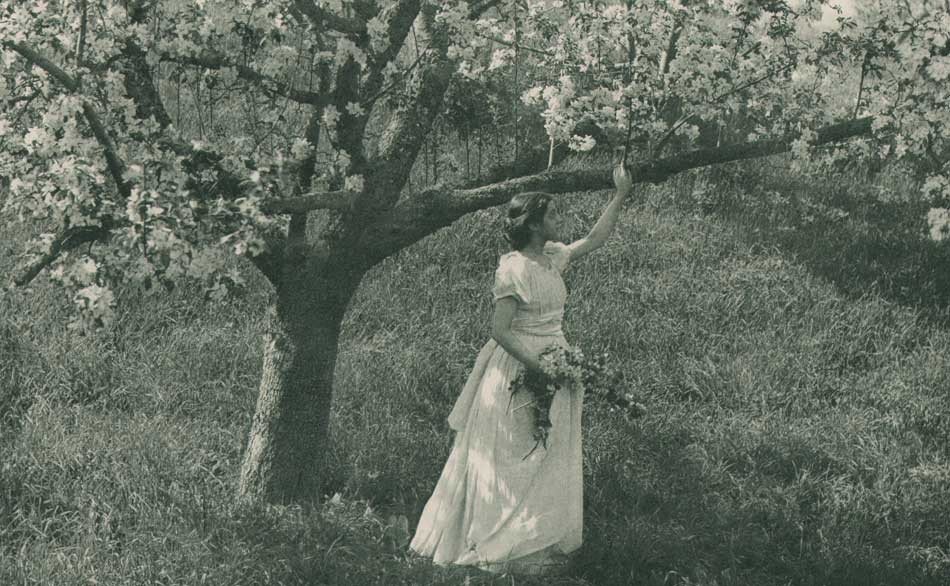 10-apple-blossoms-emma-jus
