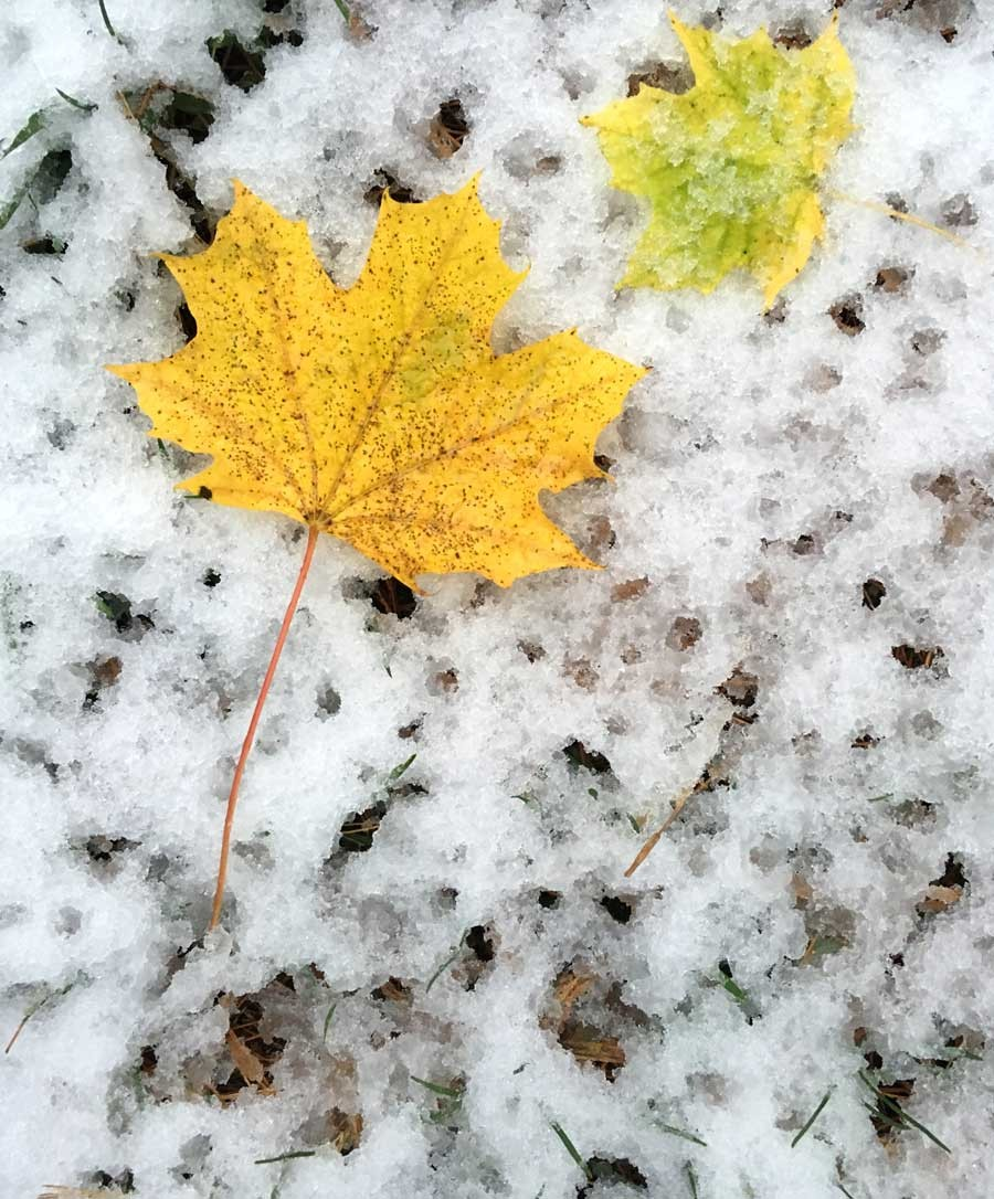 11-fall-and-winter