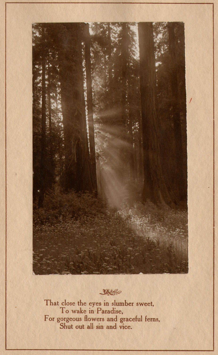 7-lc-plate-reads-sunlight-thro-the-redwoods-by-lindly-eddy-1914