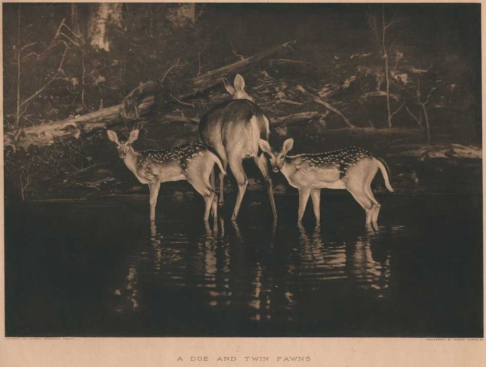 10-deer-at-night-george-sh